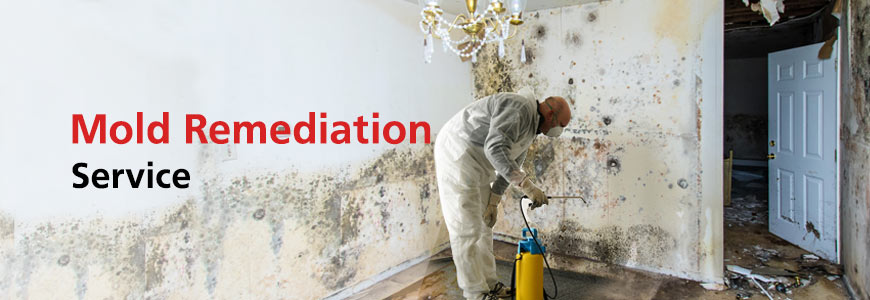 Mold Remediation Service in Greater Tulsa