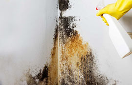 Mold Remediation in Tulsa